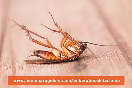 hamamböceği ilaçlama ankara